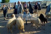 djerba;houmt;souk;ile;jerba;vache;veau;march�;marche;