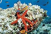 Plongée aux îles Cani