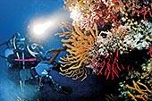 Le corail rouge
