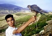el-haouaria;elevage;epervier;faucon;fauconnerie;rapace