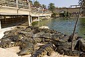 L'île aux crocodiles