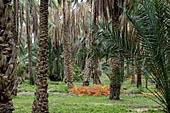 Oasis El Hamma