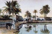 Les oasis en 1900